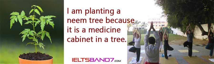neem-tree Best IELTS Band 7 Coaching in dehradun